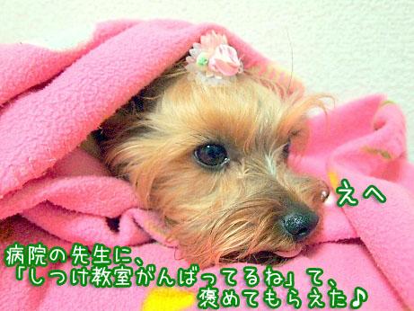 5_20100324120047.jpg