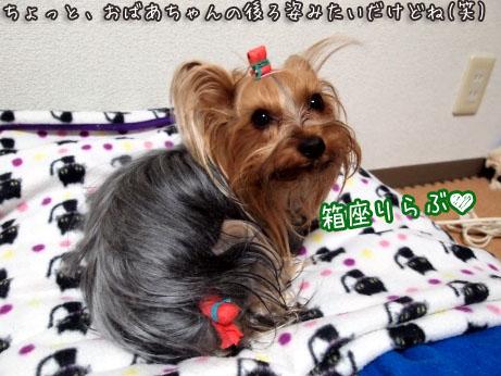 5_20100329191836.jpg
