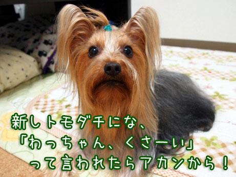 5_20100402191938.jpg