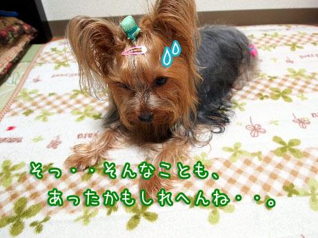 5_20100408193633.jpg