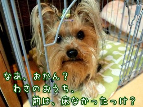 5_20100415204055.jpg