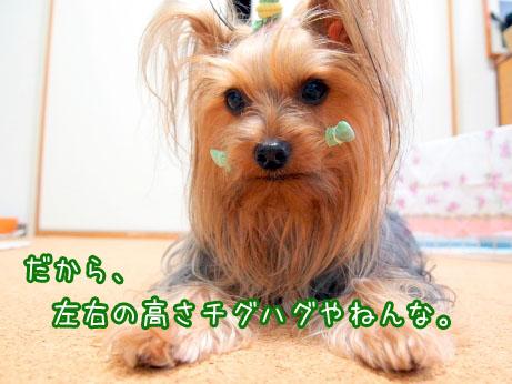 5_20100418185900.jpg