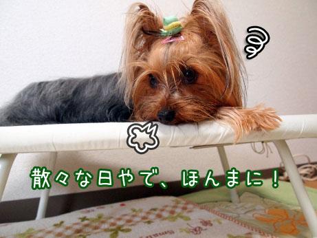 5_20100419180539.jpg