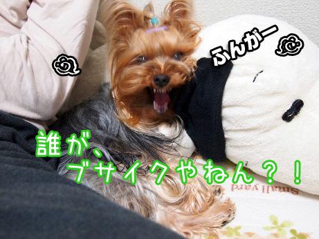 5_20100511191438.jpg