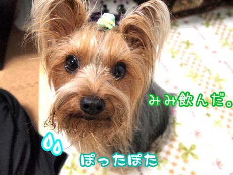 5_20100513184421.jpg