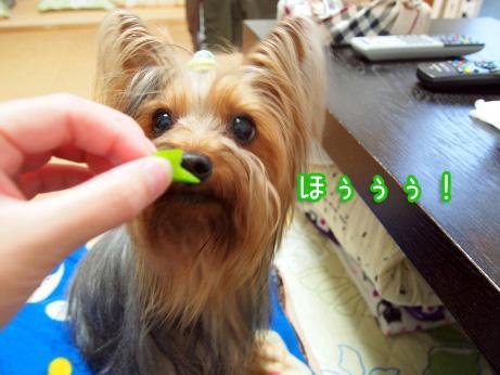 5_20100515191028.jpg