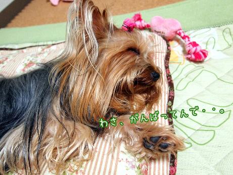 5_20100605210532.jpg