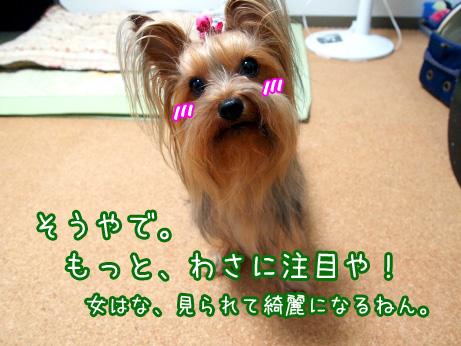 5_20100608181101.jpg