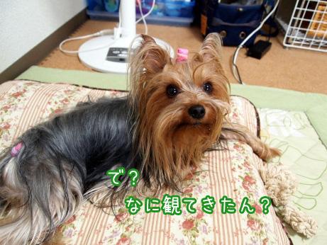 5_20100609154914.jpg