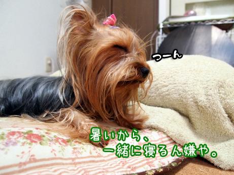 5_20100610174521.jpg