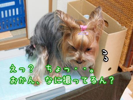5_20100618170803.jpg