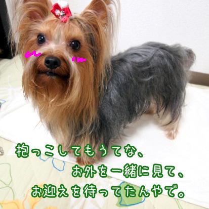 5_20100702172356.jpg