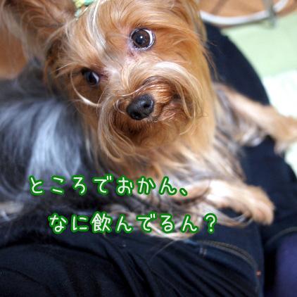 5_20100706190956.jpg