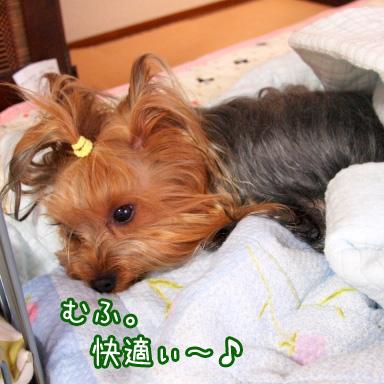 5_20100722184615.jpg