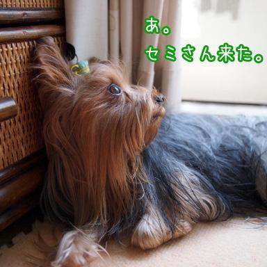5_20100725190943.jpg
