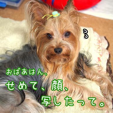 5_20100726191409.jpg