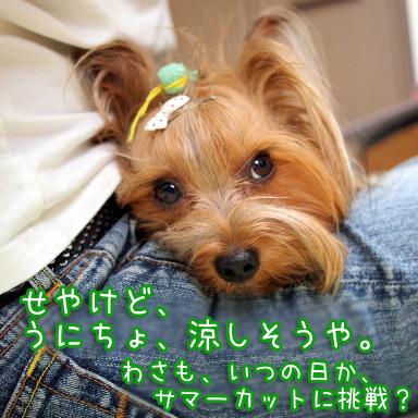 5_20100727201444.jpg