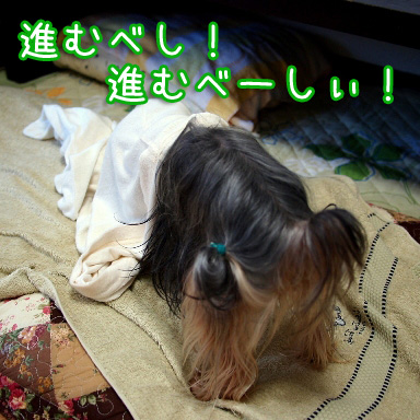 5_20100804191513.jpg