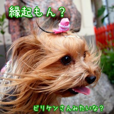 5_20100805193517.jpg