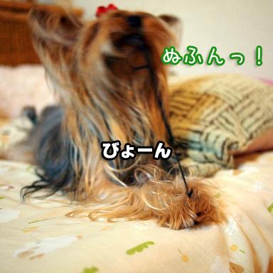5_20100810201833.jpg