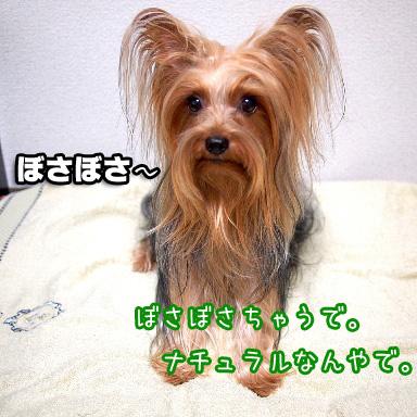 5_20100811190838.jpg