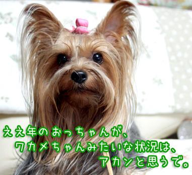 5_20100816195655.jpg