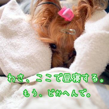 5_20100823191043.jpg