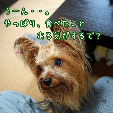 5_20100825200625.jpg