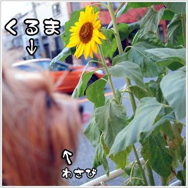 5_20100826195300.jpg