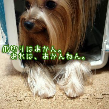 5_20100914205340.jpg