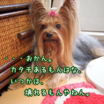 5_20100915192043.jpg