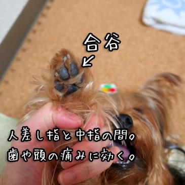 5_20100928164218.jpg
