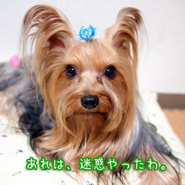 5_20101011192352.jpg