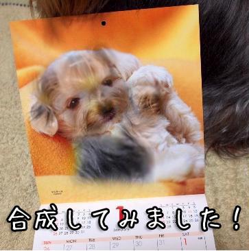 5_20101013200734.jpg