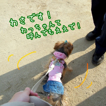 5_20101014201429.jpg