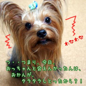 5_20101015192825.jpg