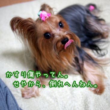5_20101018175119.jpg