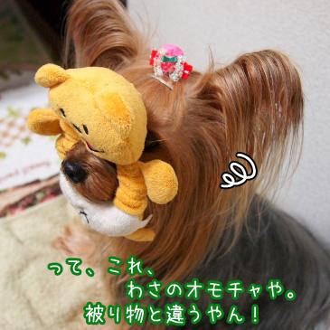 5_20101031161410.jpg