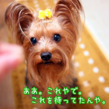 5_20101109195631.jpg