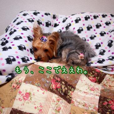 5_20101116185115.jpg