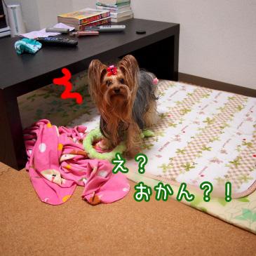 5_20101118190912.jpg