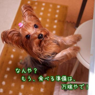 5_20101221212536.jpg