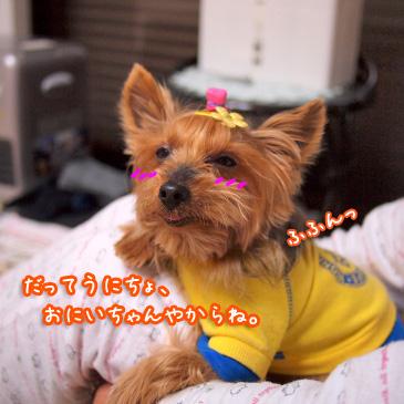 5_20101228150949.jpg
