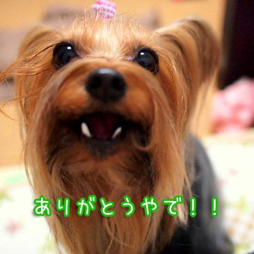 5_20101231185213.jpg