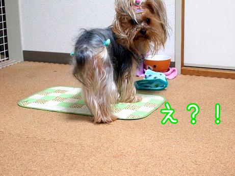 6_20100227192559.jpg