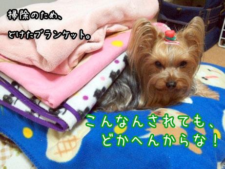 6_20100316195519.jpg
