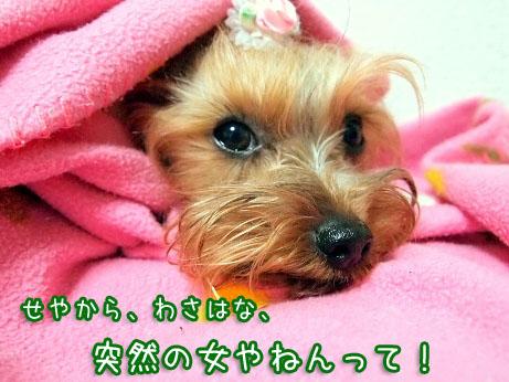 6_20100324120047.jpg