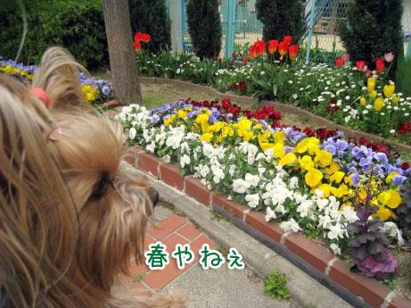 6_20100331170348.jpg