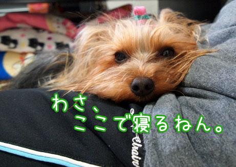 6_20100405192759.jpg