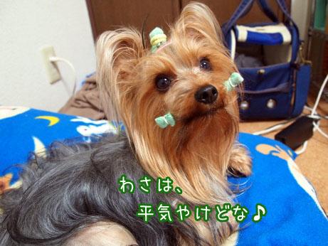 6_20100418185900.jpg